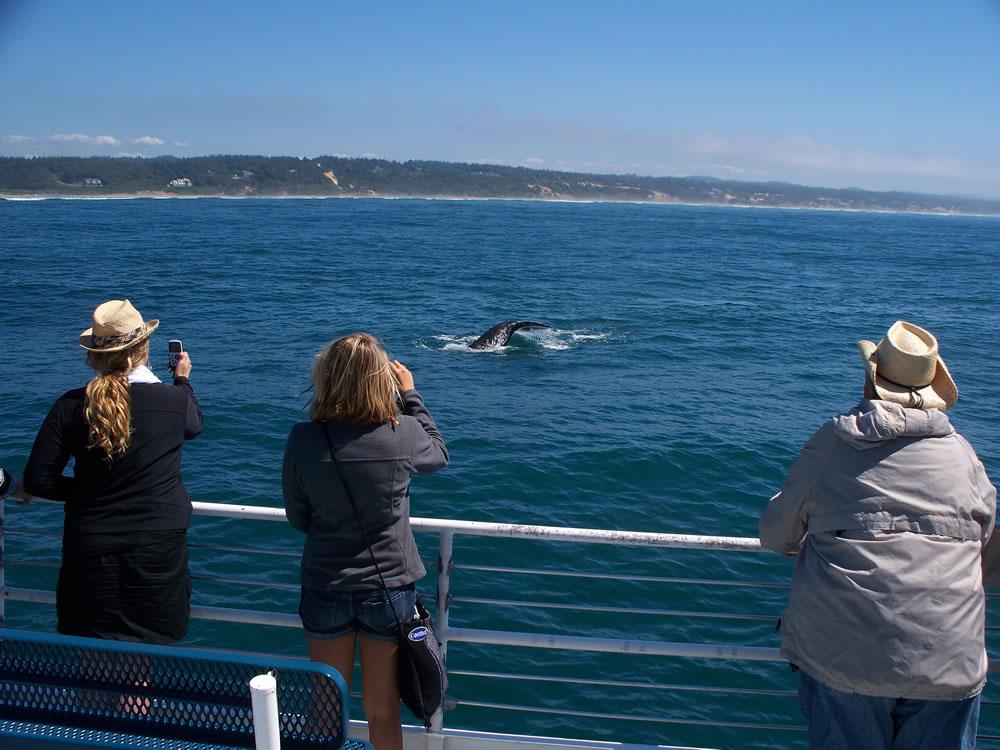 15 SLC whale activity