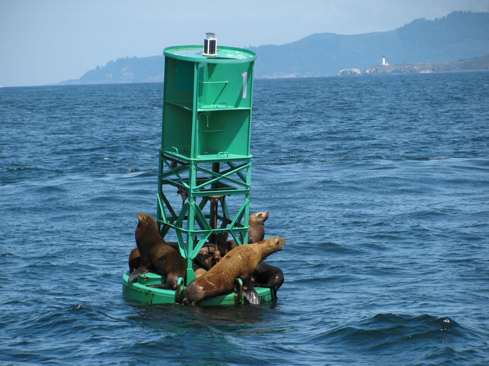 SEA LION BUOY Aug 09 033